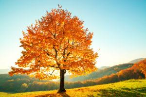 Over deze herfstboom kun je veel vragen stellen