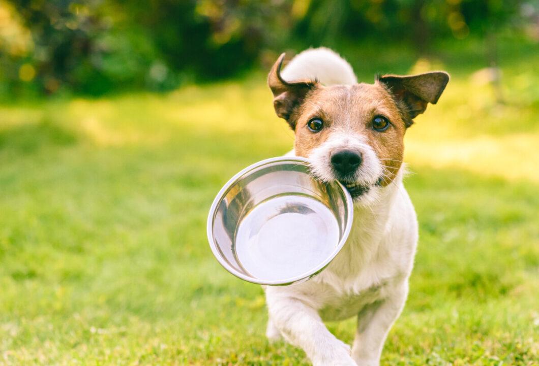 Je hond hoort ook bij jou. Je bent een optelsom. Zo kun je worden wie je bent.