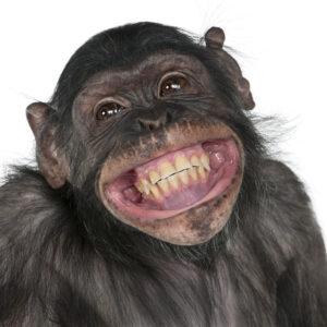 De selfie makende aap is een mooi tegenvoorbeeld